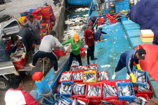 Sọt cá Nhựa Bình Thuận được ngư dân Nghệ An tin dùng