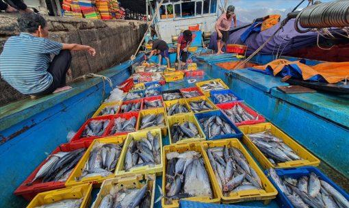 Sọt cá Nhựa Bình Thuận được ngư dân Thanh Hóa tin dùng
