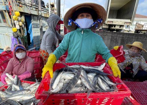 Sọt cá Nhựa Bình Thuận tại biển Thanh Hóa