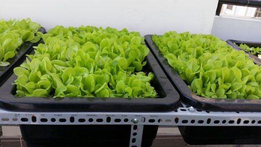 Khay trồng rau thông minh - Nhựa Bình Thuận tại Hà Nội