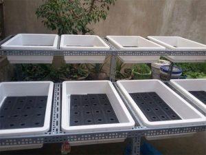 Khay trồng rau sạch được lắp trên các giá giúp tiết kiệm diện tích, nước tưới, phân bón hiệu quả