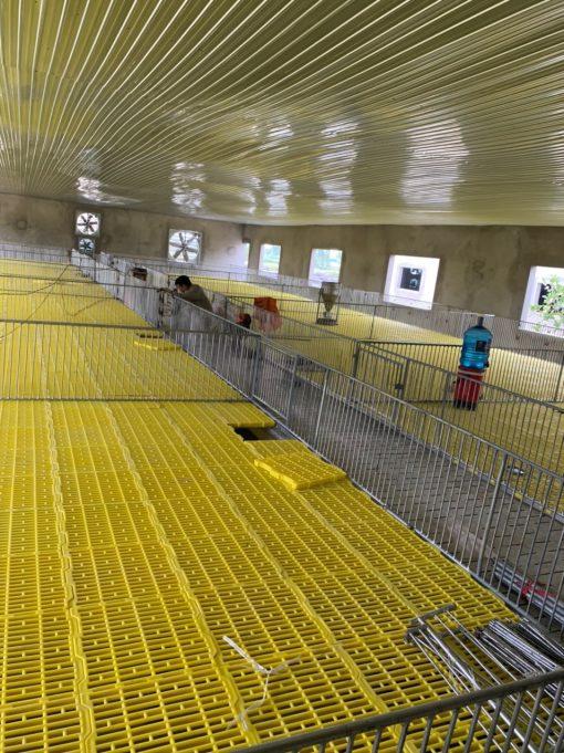 Sàn heo 40x40 Nhựa Bình Thuận tại Hà Nội - Số lượng lớn
