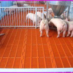 Sàn nhựa chăn nuôi - Nhựa Bình Thuận tại Hà Nội