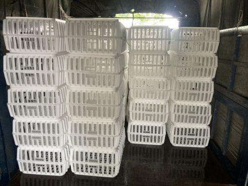 Lồng nhựa bắt gà CP - Cao 31cm - Nhựa Bình Thuận tại Hà Nội