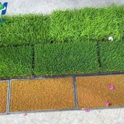 Khay gieo mạ - Nhựa Bình Thuận tại Hà Nội